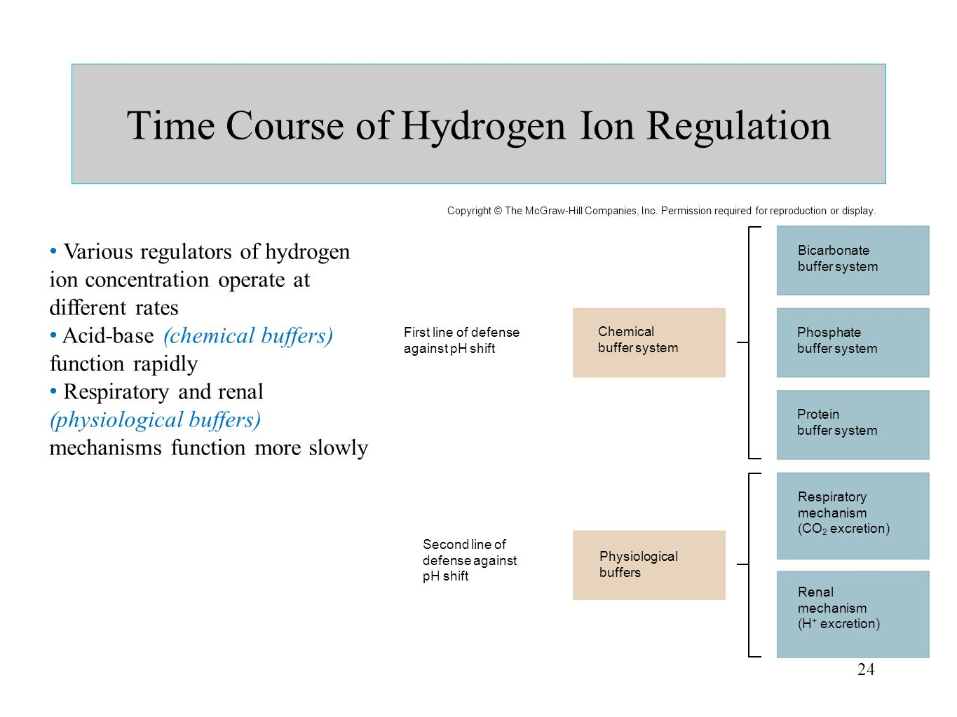 Time Course of Hydrogen Ion Regulation