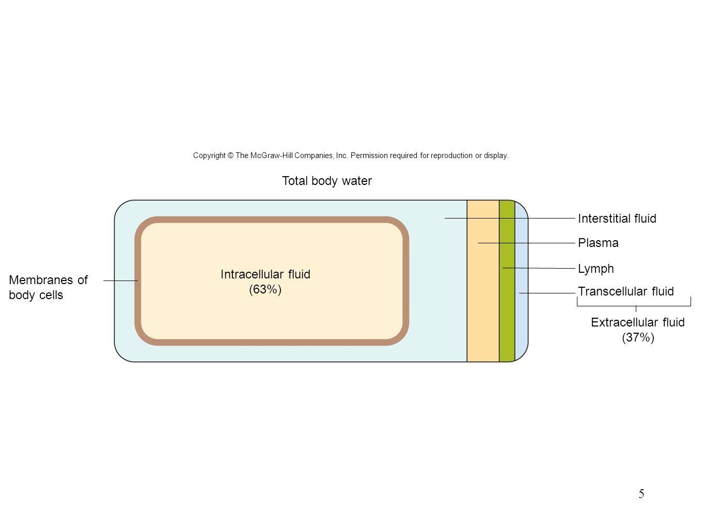 5 Total body water Interstitial fluid Plasma Lymph Intracellular fluid