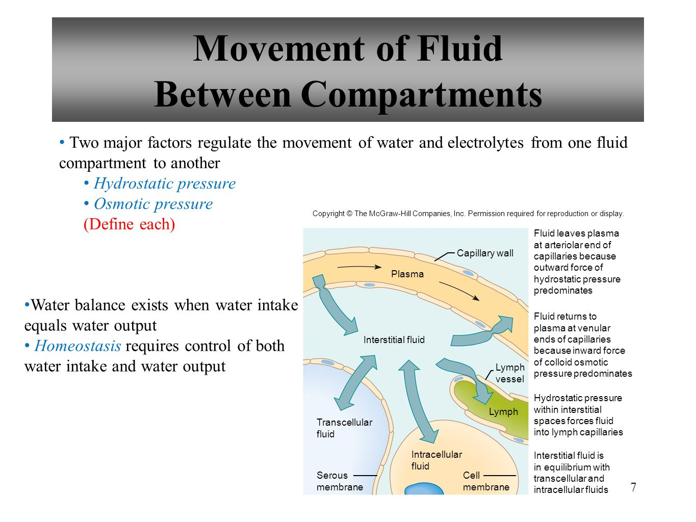 Movement of Fluid Between Compartments