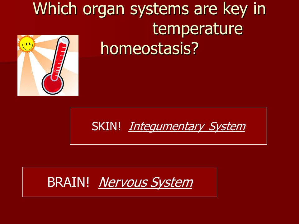 Which organ systems are key in temperature homeostasis