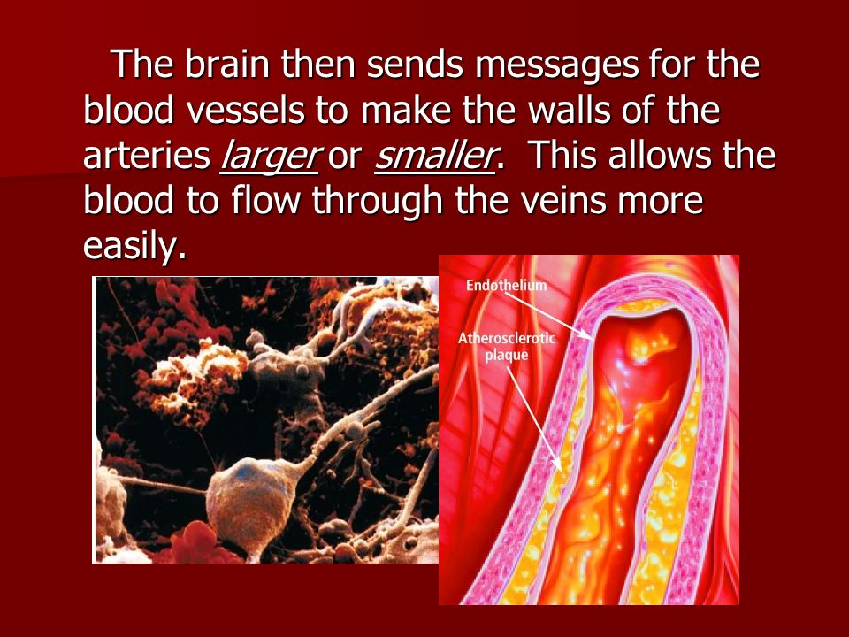 The brain then sends messages for the blood vessels to make the walls of the arteries larger or smaller.