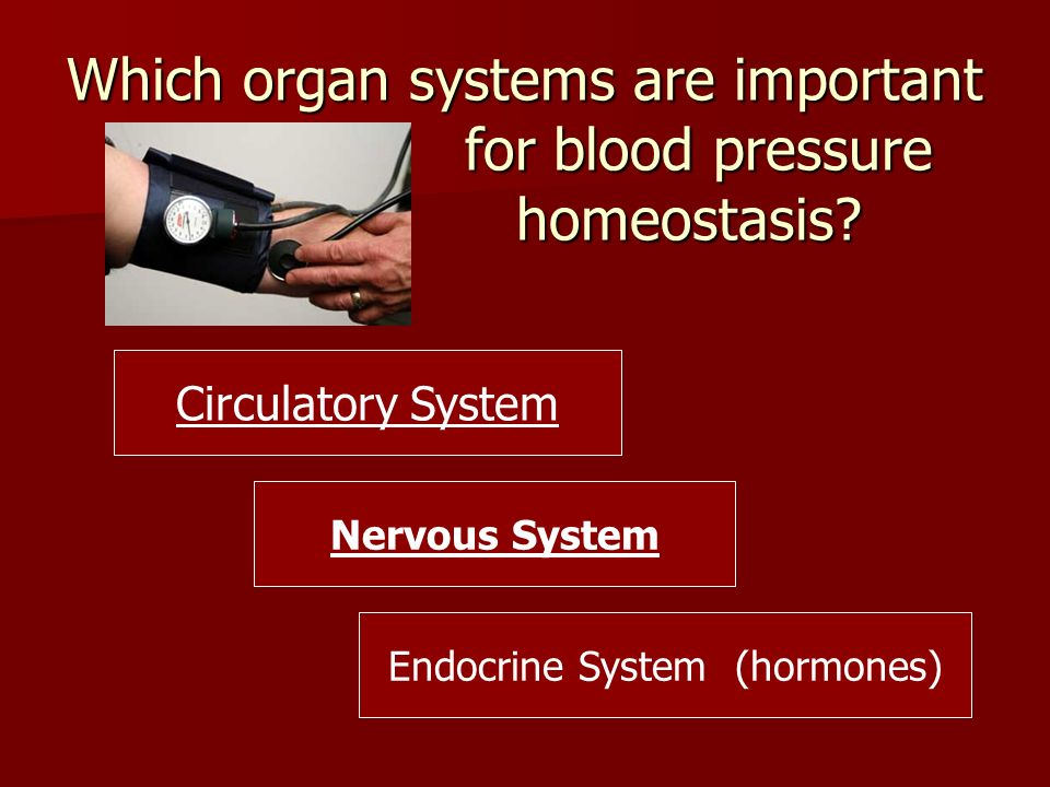 Which organ systems are important for blood pressure homeostasis