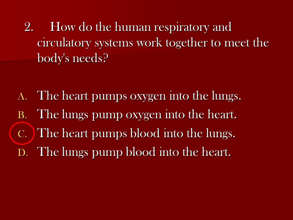 2. How do the human respiratory and circulatory systems work together to meet the body s needs