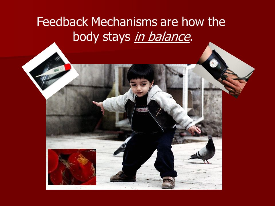 Feedback Mechanisms are how the