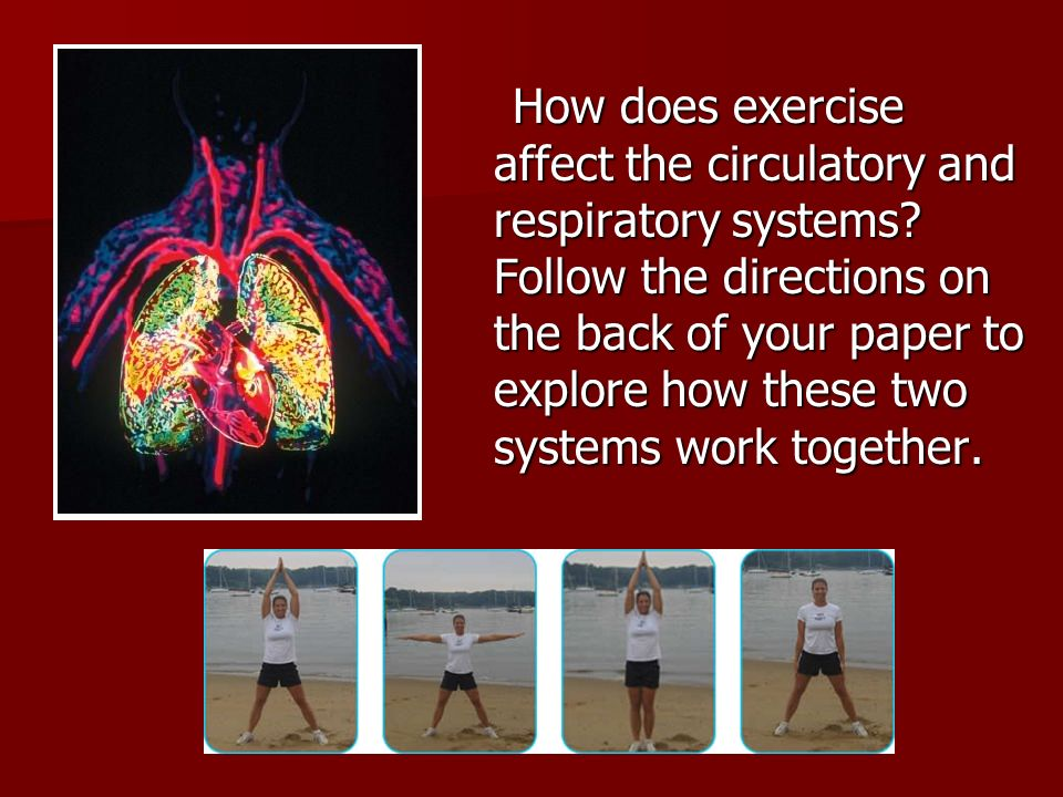 How does exercise affect the circulatory and respiratory systems