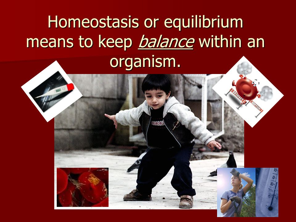 Homeostasis or equilibrium means to keep balance within an organism.