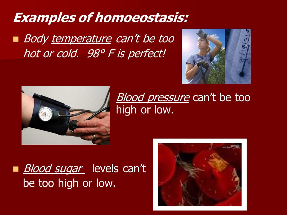Examples of homoeostasis: