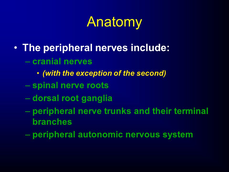 Anatomy The peripheral nerves include: cranial nerves