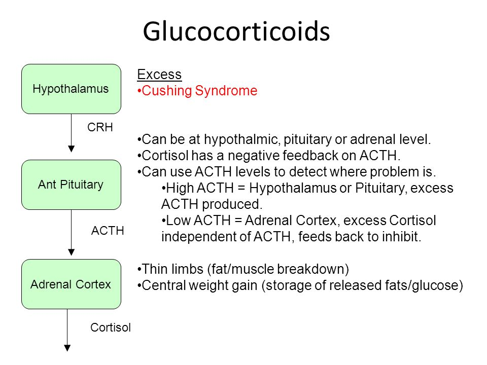 Glucocorticoids Excess Cushing Syndrome