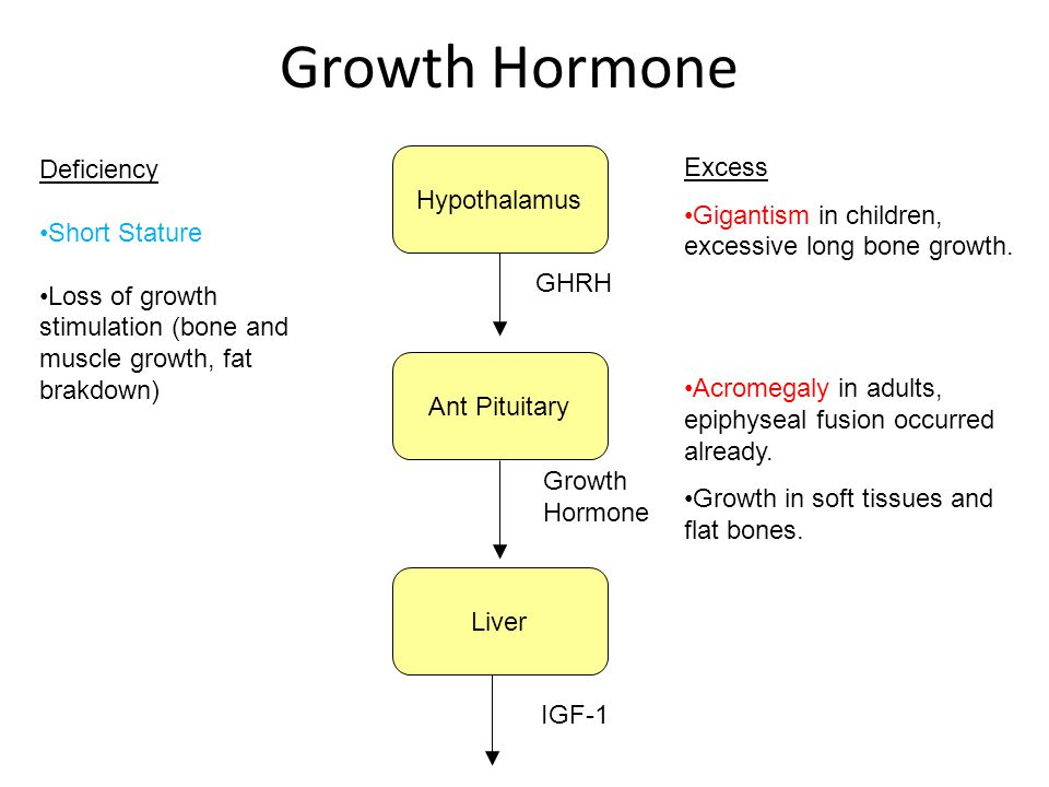 Growth Hormone Deficiency Excess Hypothalamus