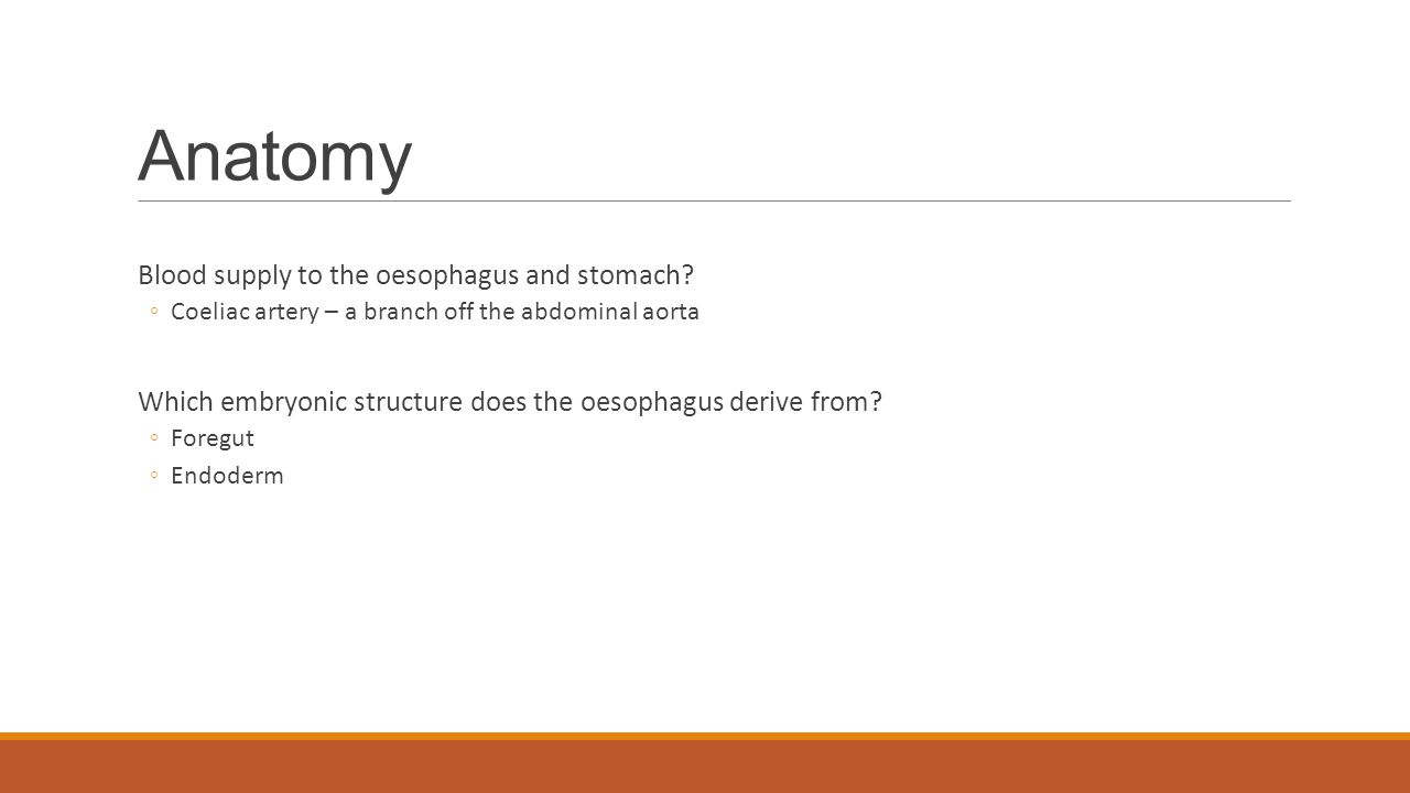 Anatomy Blood supply to the oesophagus and stomach