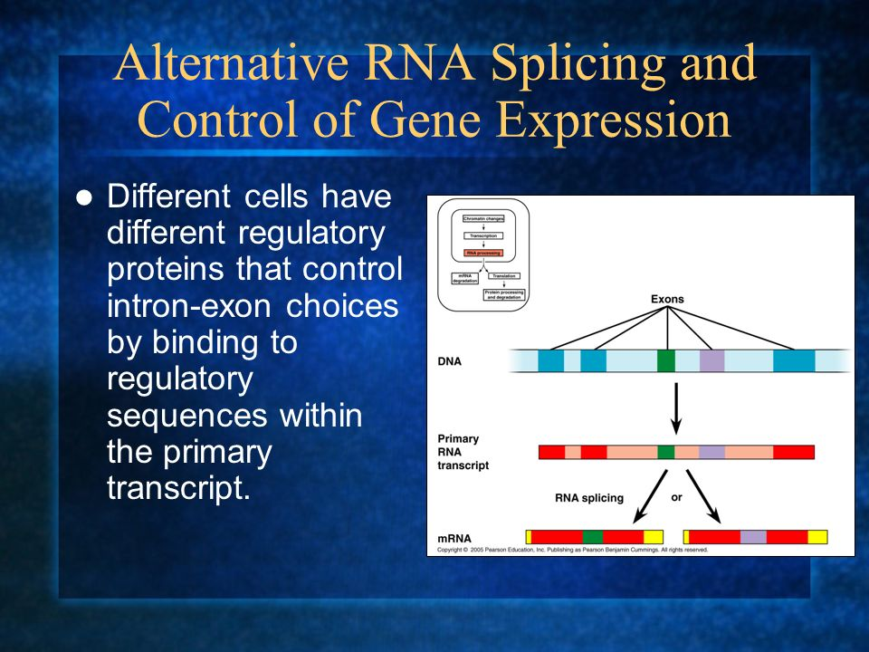 Alternative RNA Splicing and Control of Gene Expression