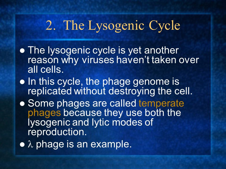 2. The Lysogenic Cycle The lysogenic cycle is yet another reason why viruses haven't taken over all cells.