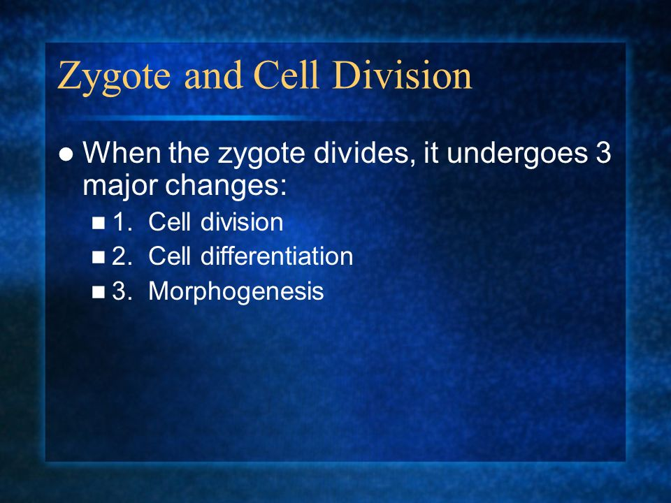 Zygote and Cell Division
