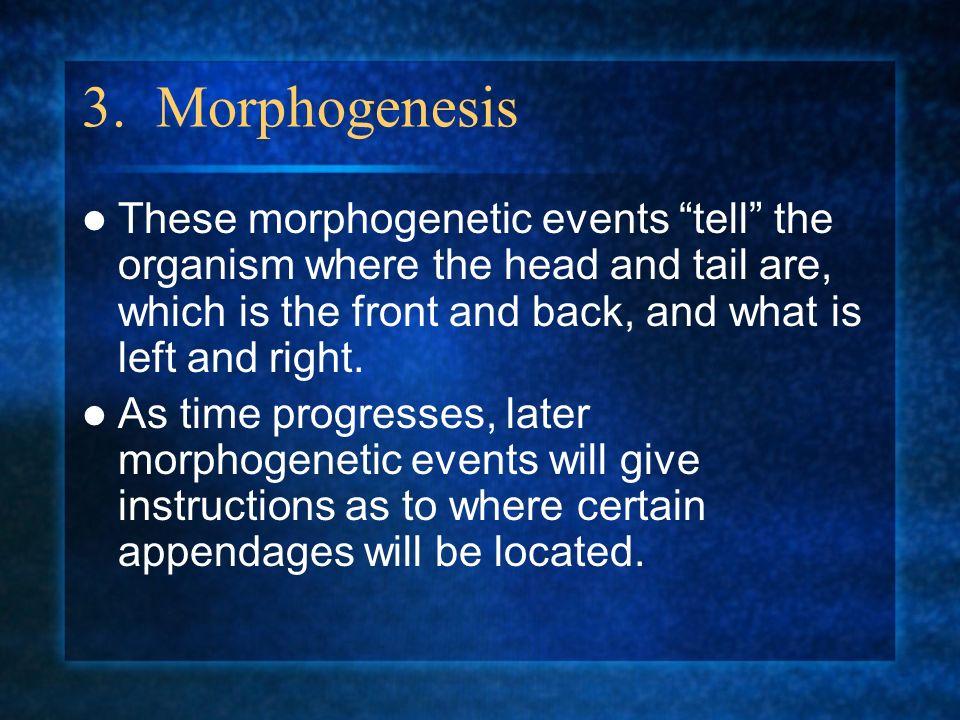 3. Morphogenesis