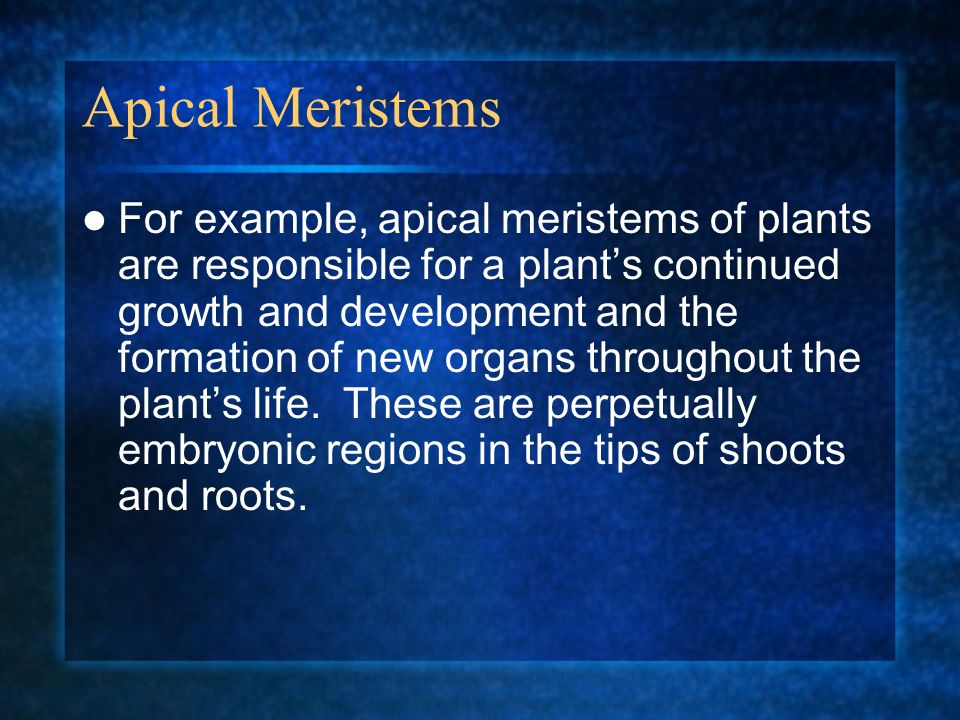 Apical Meristems
