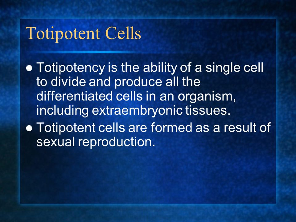 Totipotent Cells