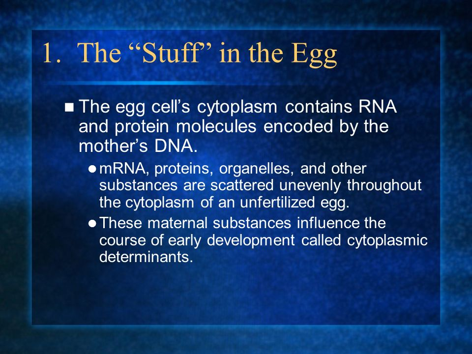 1. The Stuff in the Egg The egg cell's cytoplasm contains RNA and protein molecules encoded by the mother's DNA.
