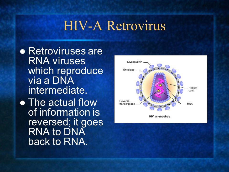 HIV-A Retrovirus Retroviruses are RNA viruses which reproduce via a DNA intermediate.