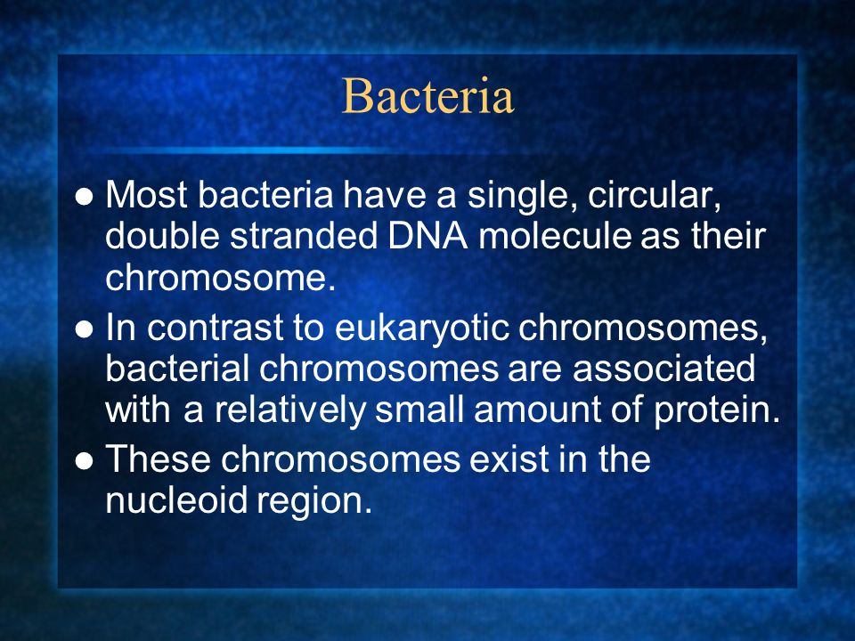 Bacteria Most bacteria have a single, circular, double stranded DNA molecule as their chromosome.
