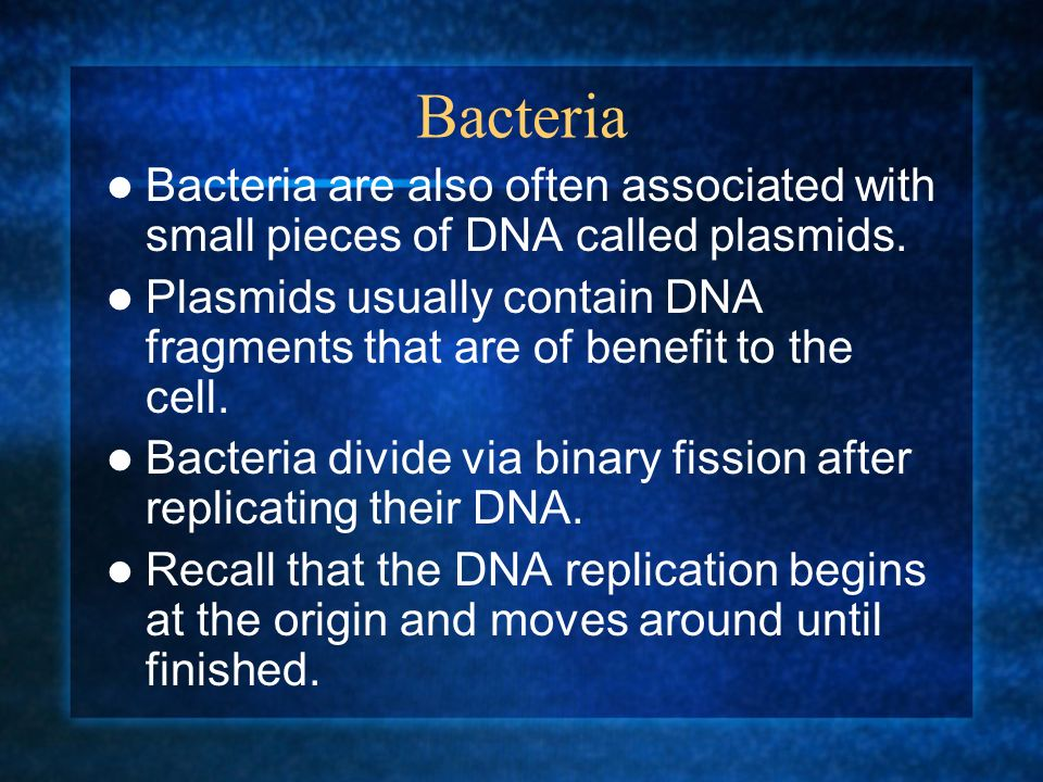 Bacteria Bacteria are also often associated with small pieces of DNA called plasmids.