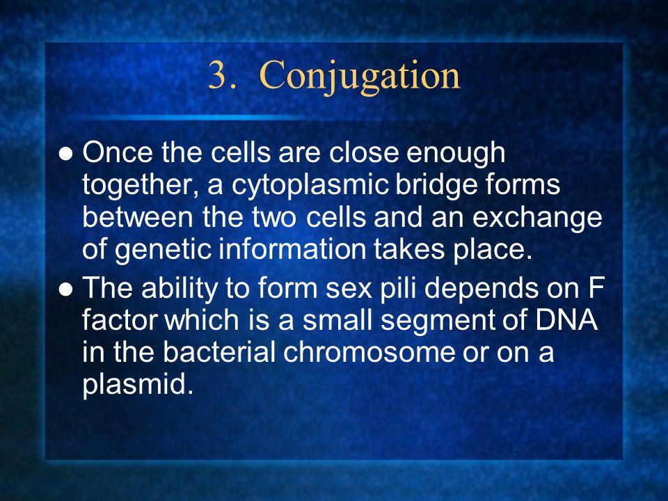 3. Conjugation