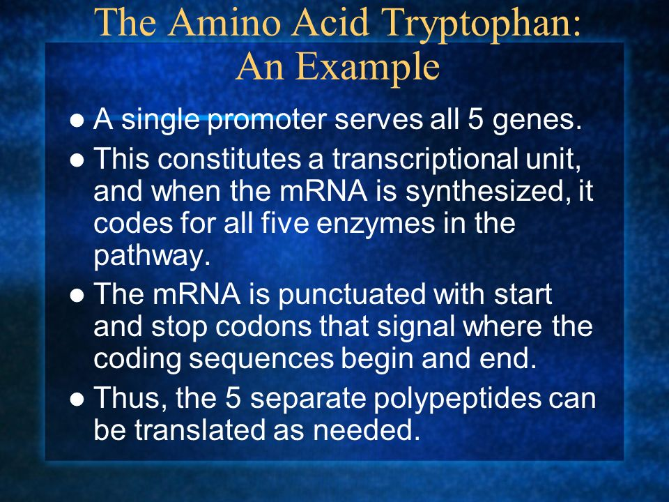 The Amino Acid Tryptophan: An Example