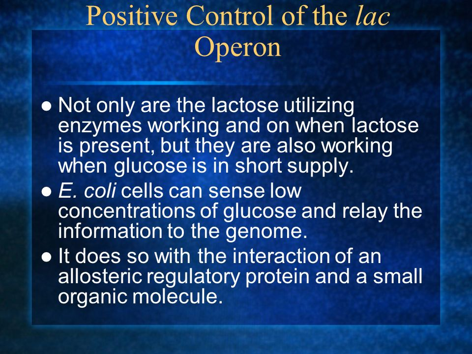 Positive Control of the lac Operon