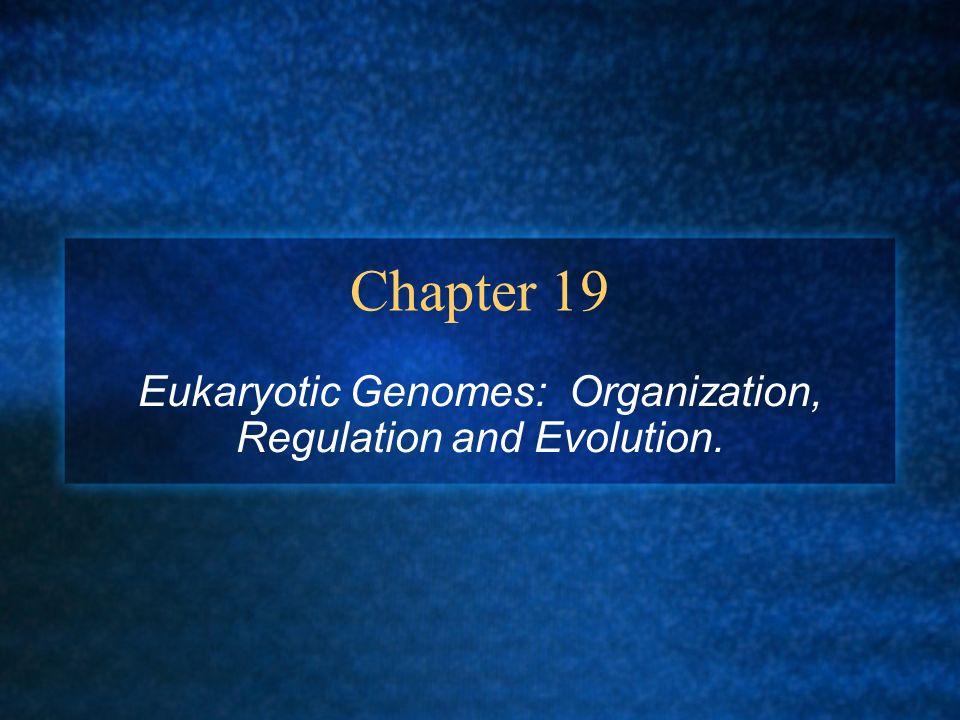 Eukaryotic Genomes: Organization, Regulation and Evolution.