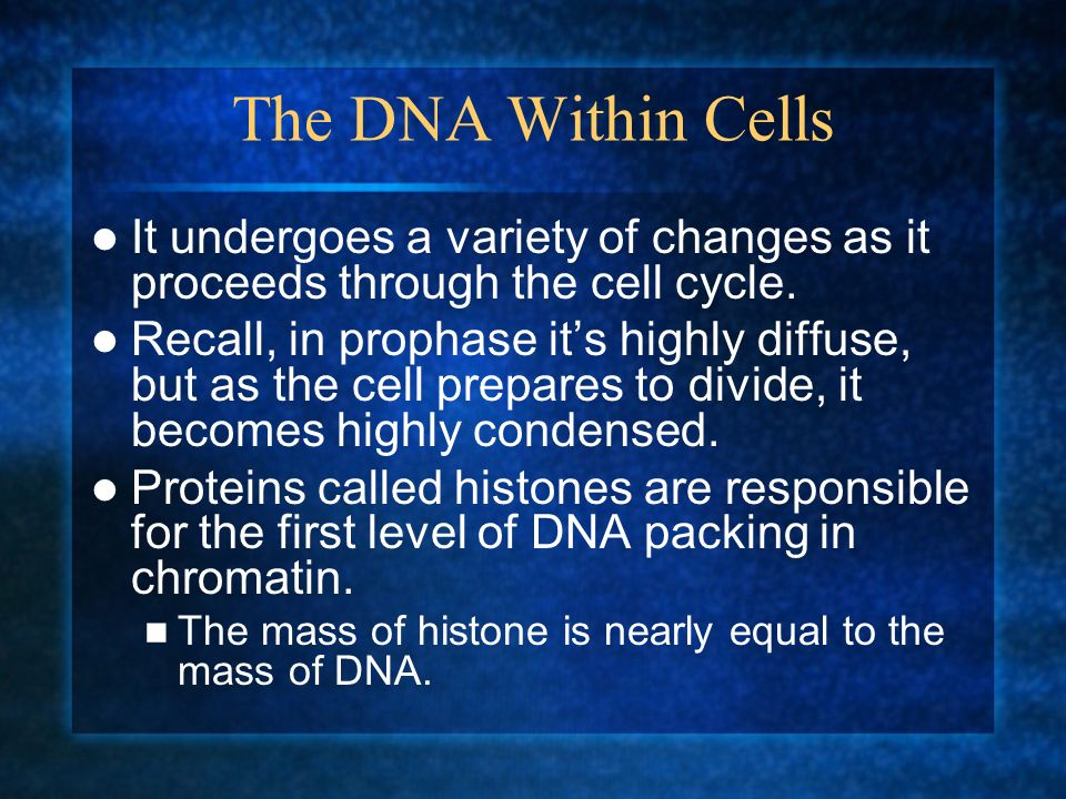 The DNA Within Cells It undergoes a variety of changes as it proceeds through the cell cycle.
