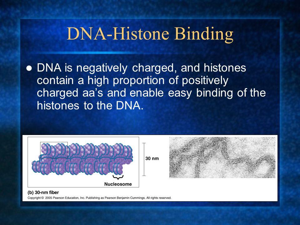 DNA-Histone Binding