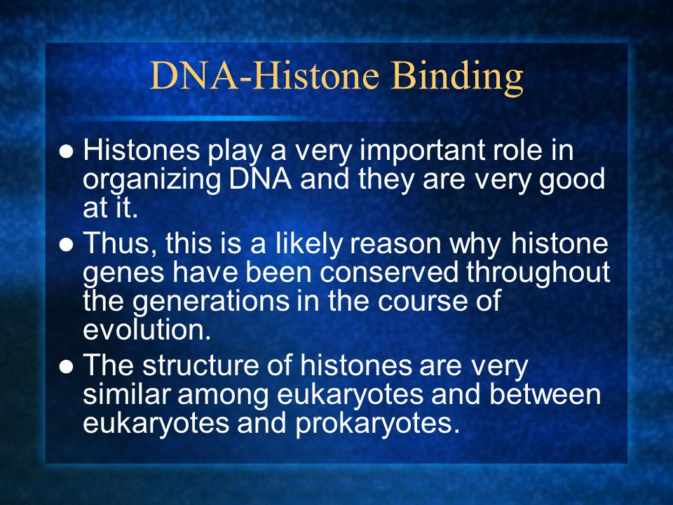 DNA-Histone Binding Histones play a very important role in organizing DNA and they are very good at it.