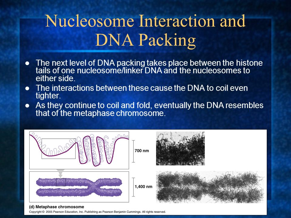 Nucleosome Interaction and DNA Packing