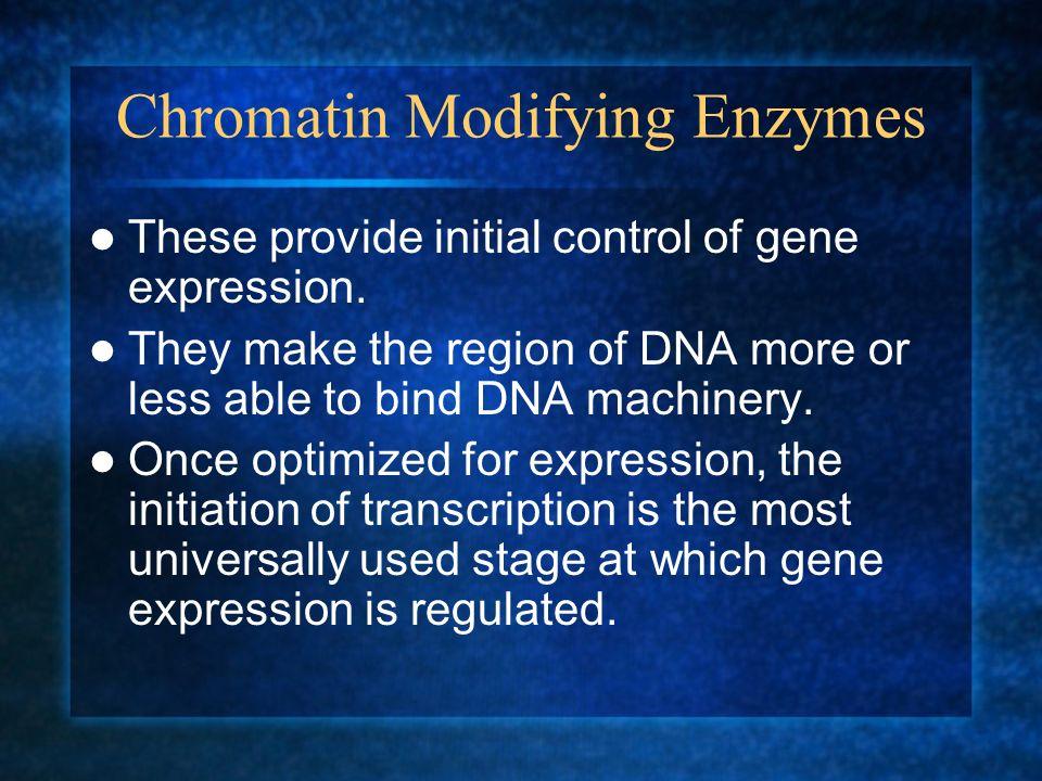 Chromatin Modifying Enzymes