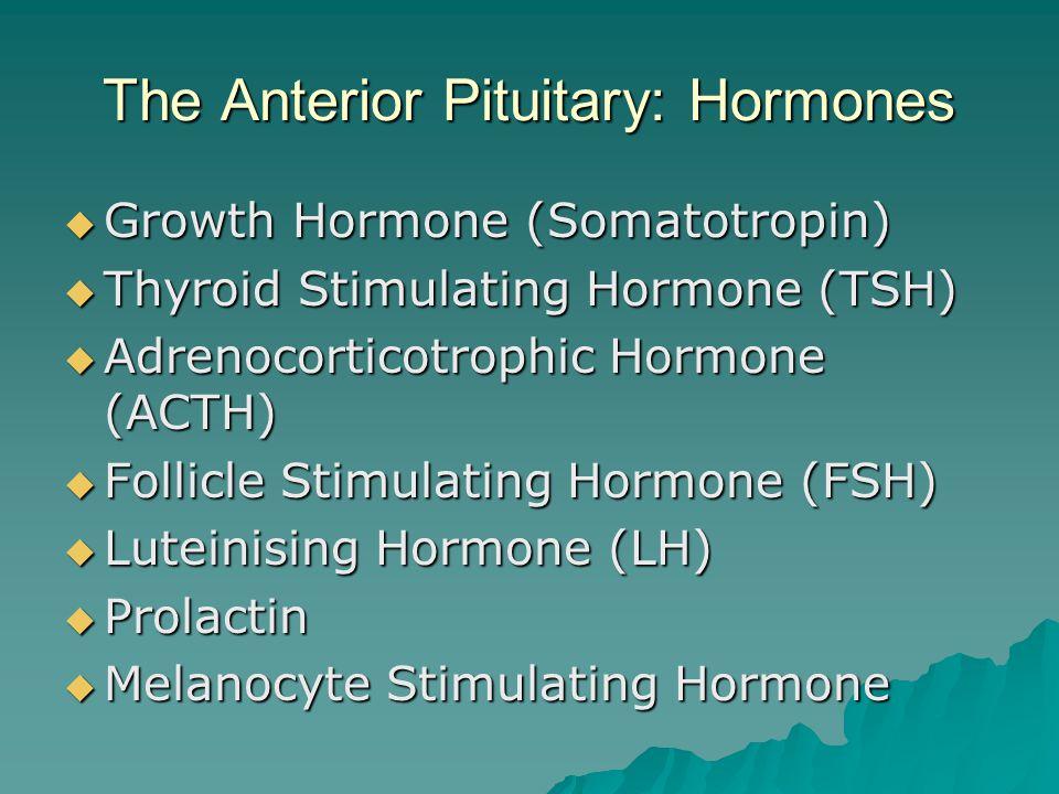The Anterior Pituitary: Hormones