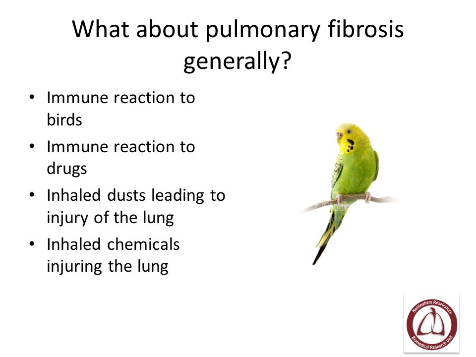 What about pulmonary fibrosis generally