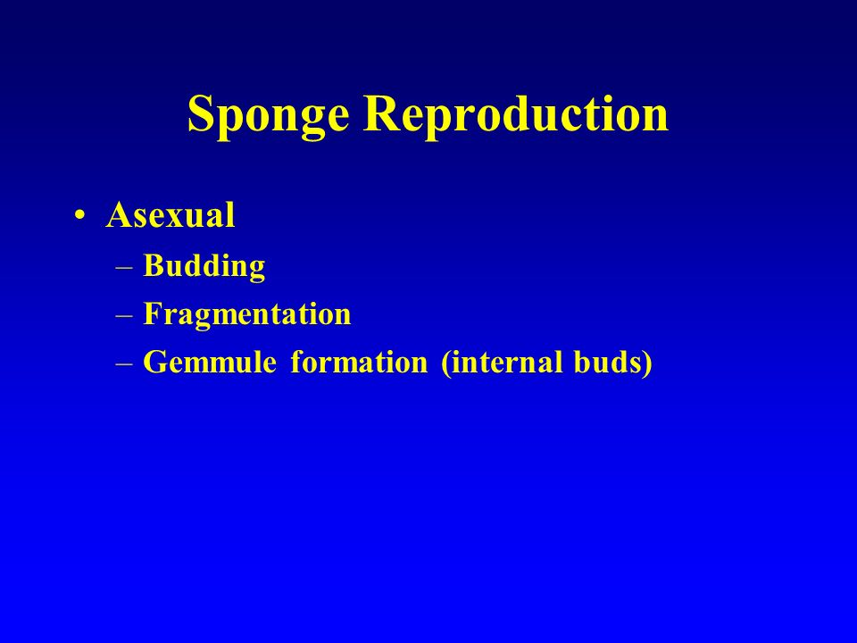 Sponge Reproduction Asexual Budding Fragmentation