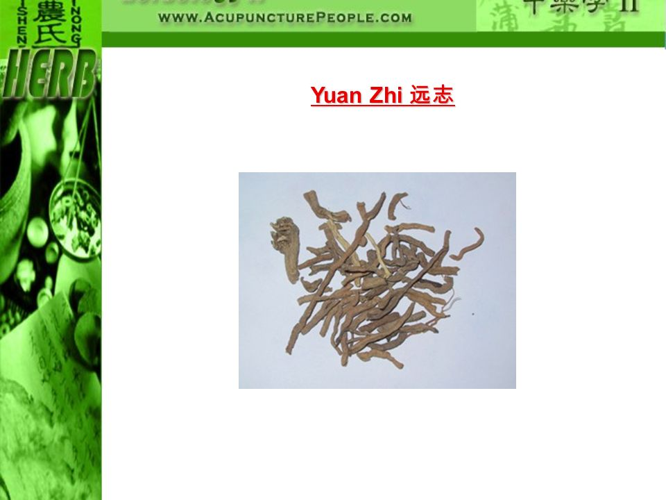 Yuan Zhi 远志