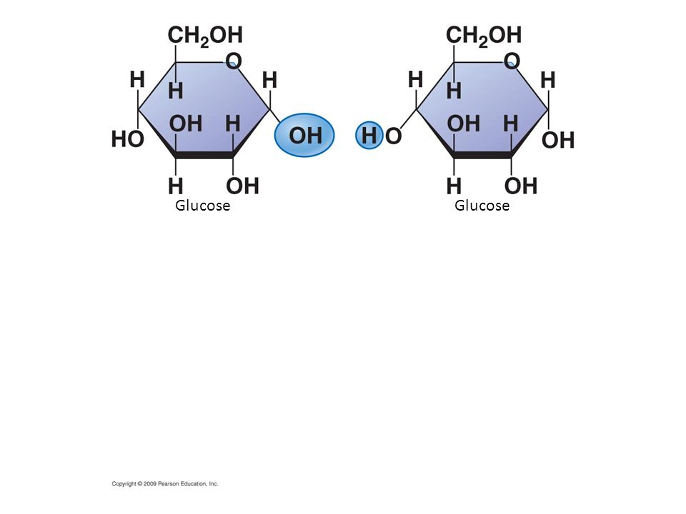 Glucose Glucose Figure 3.5 Disaccharide formation by a dehydration reaction.