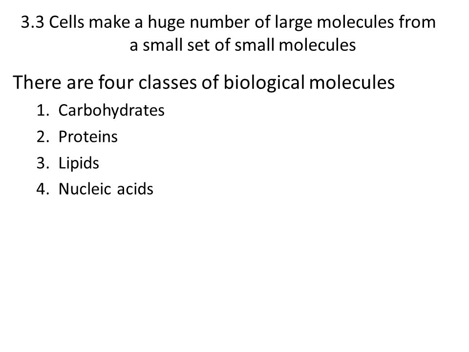 There are four classes of biological molecules