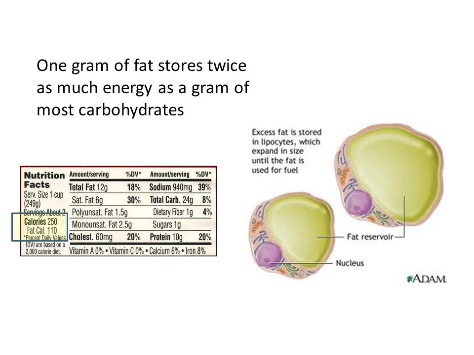 One gram of fat stores twice as much energy as a gram of most carbohydrates