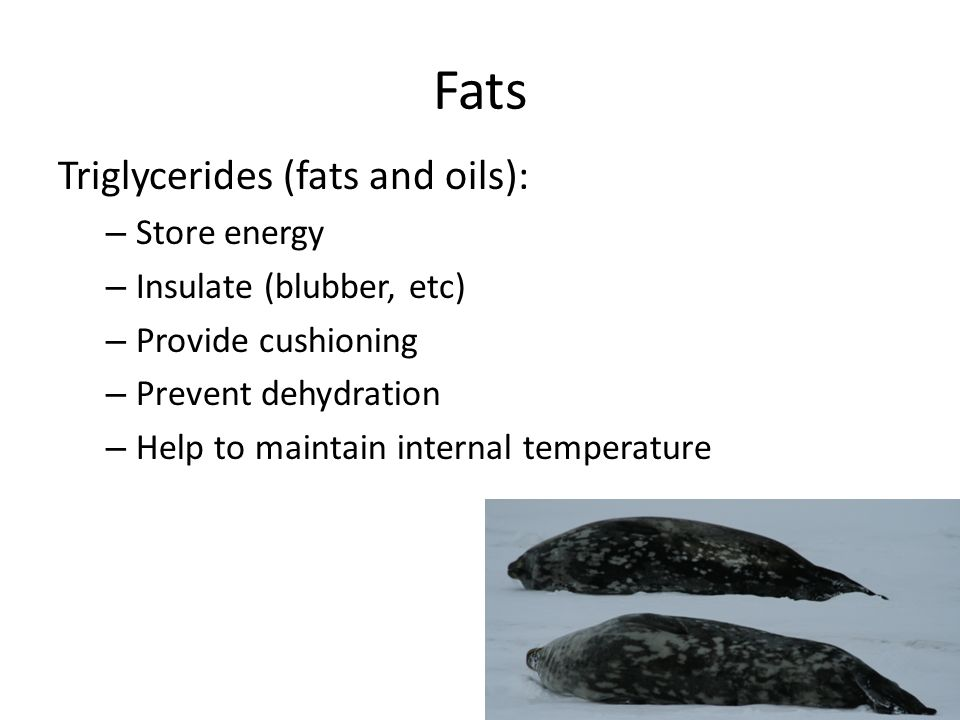 Fats Triglycerides (fats and oils): Store energy