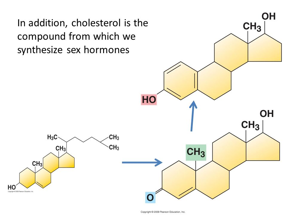 In addition, cholesterol is the compound from which we synthesize sex hormones