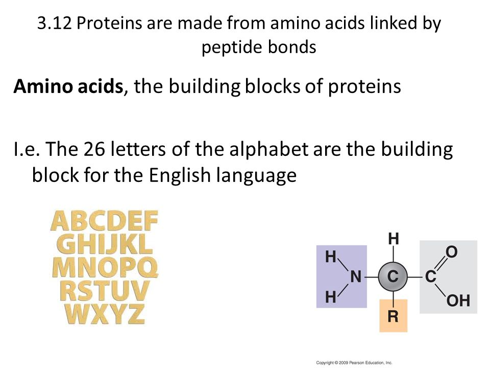 3.12 Proteins are made from amino acids linked by peptide bonds