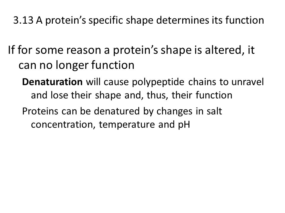3.13 A protein's specific shape determines its function
