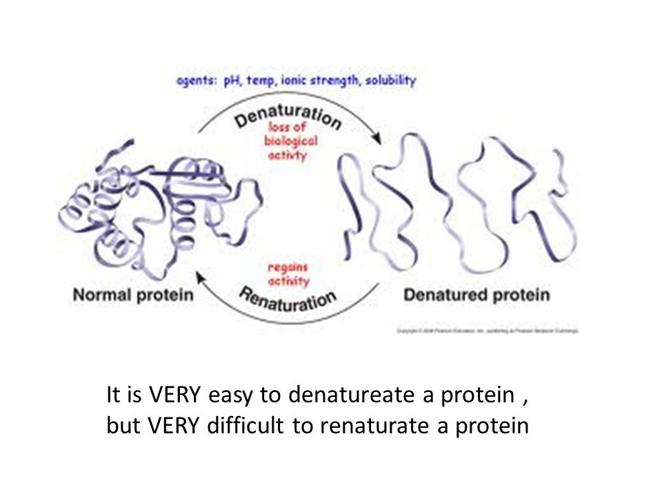 It is VERY easy to denatureate a protein , but VERY difficult to renaturate a protein