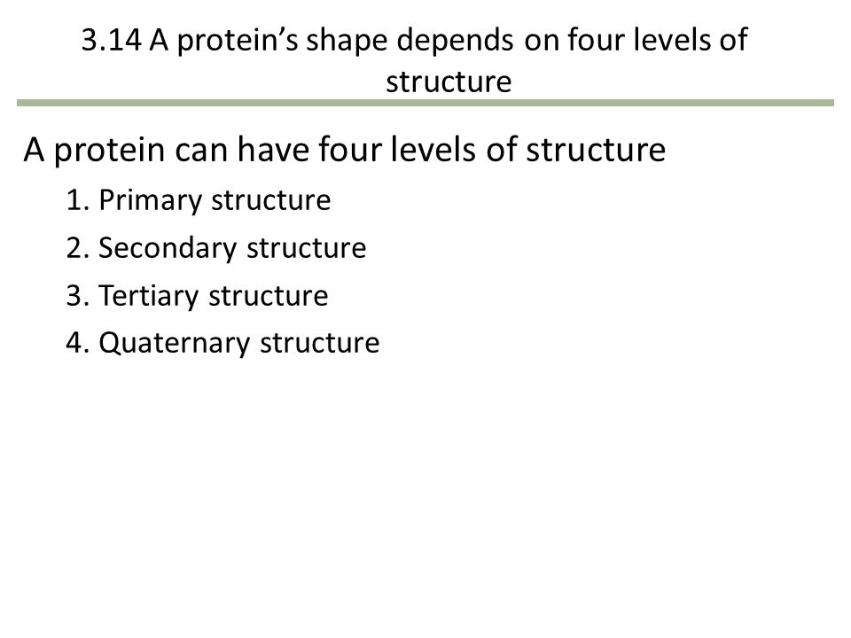 3.14 A protein's shape depends on four levels of structure