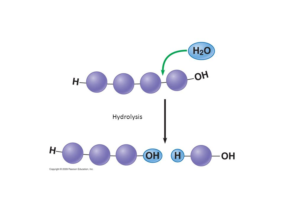 Hydrolysis Figure 3.3B Hydrolysis breaks a polymer chain.