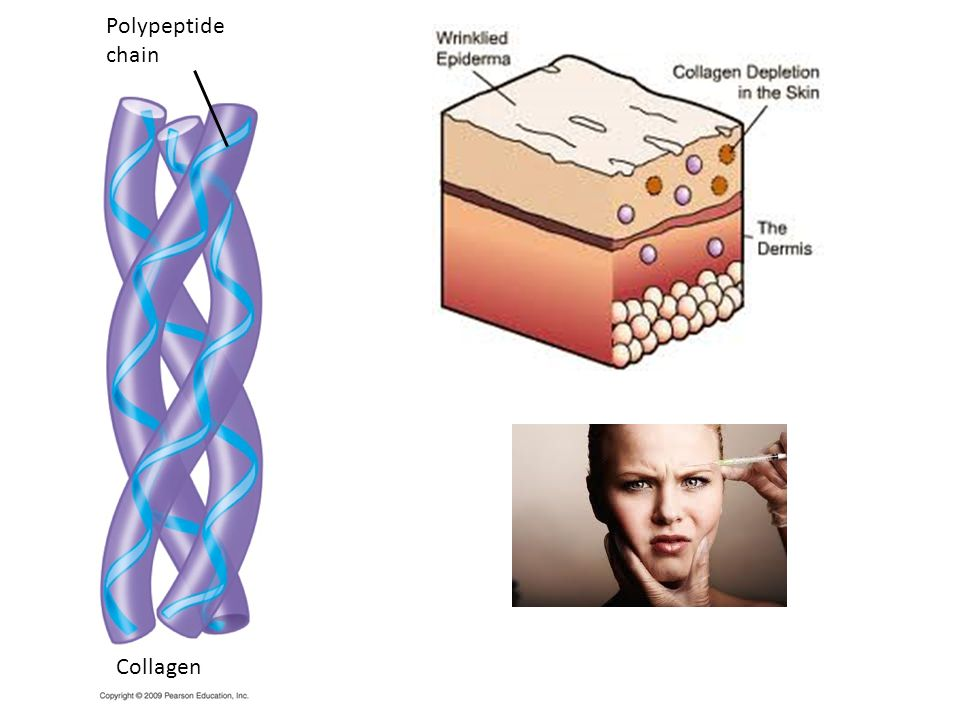 Polypeptide chain Figure 3.14UN02 Collagen. Collagen