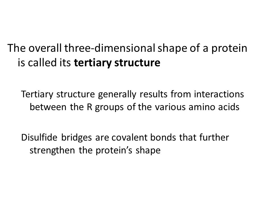 The overall three-dimensional shape of a protein is called its tertiary structure
